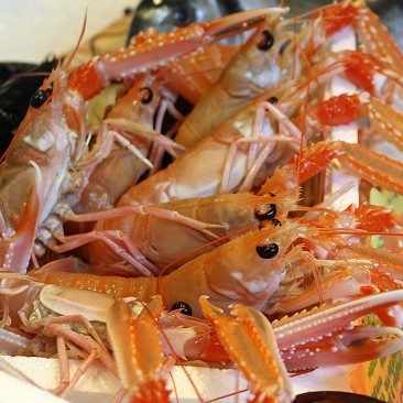 Norway lobsters ( langoustines )