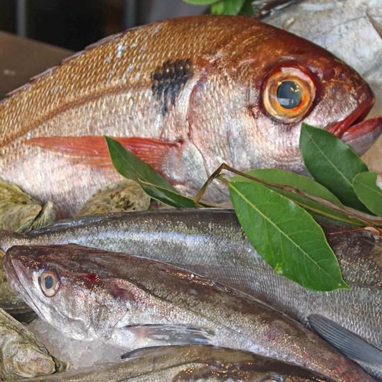 Stefano pescherie vendita diretta pesce fresco miglior for Comprare pesci online