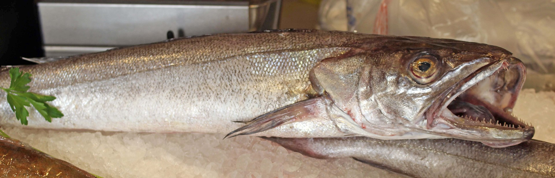 Stefano pescherie nasello cucinare nasello pesce per for Comprare pesci online