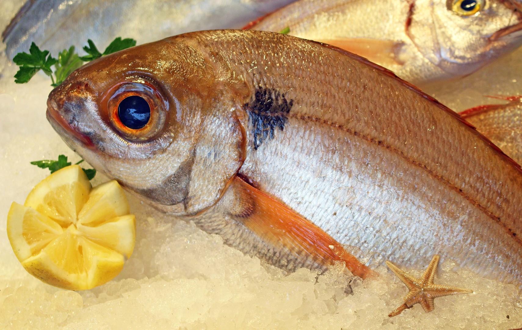 Stefano pescherie pagello occhione comprare occhione for Comprare pesci