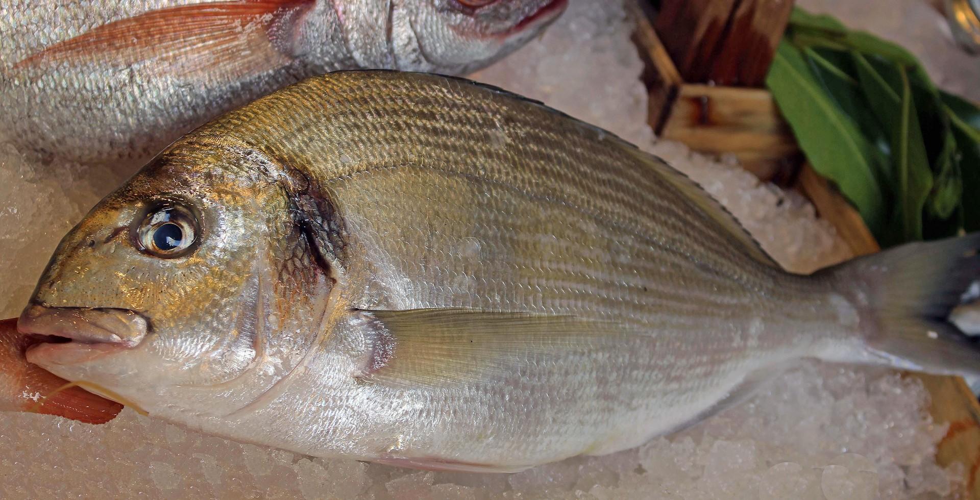 Stefano pescherie orata pescata orata pescata prezzo for Comprare pesci